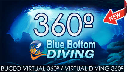 Buceo virtual diving bluebottom