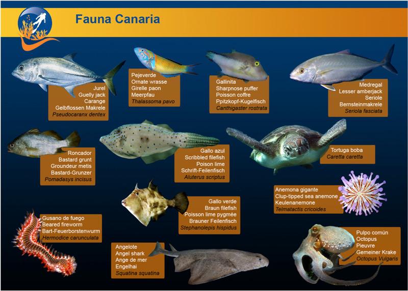 Fauna local Canaria